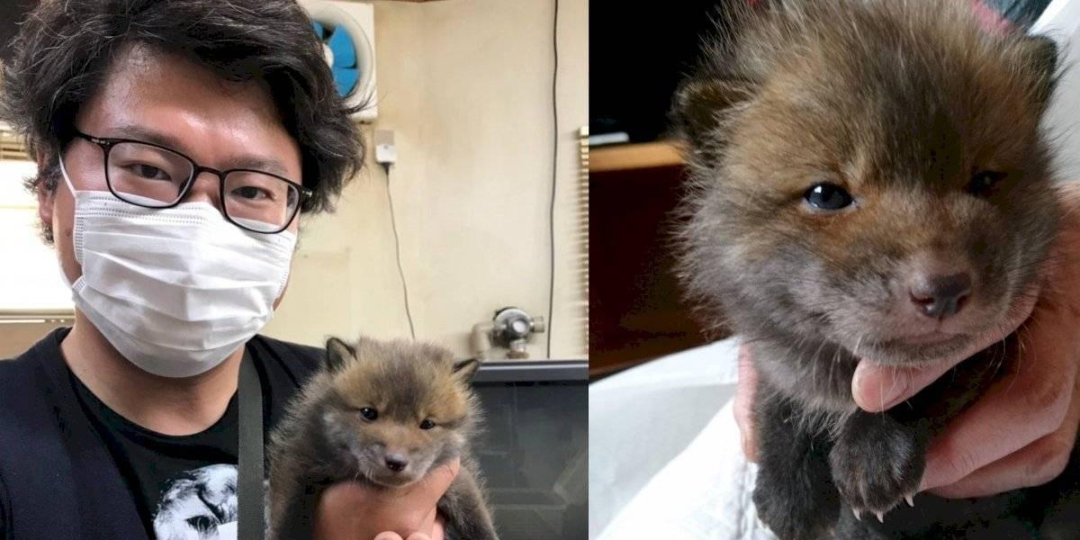 Hombre rescató lo que parecía ser un adorable perrito, pero se llevó una gran sorpresa