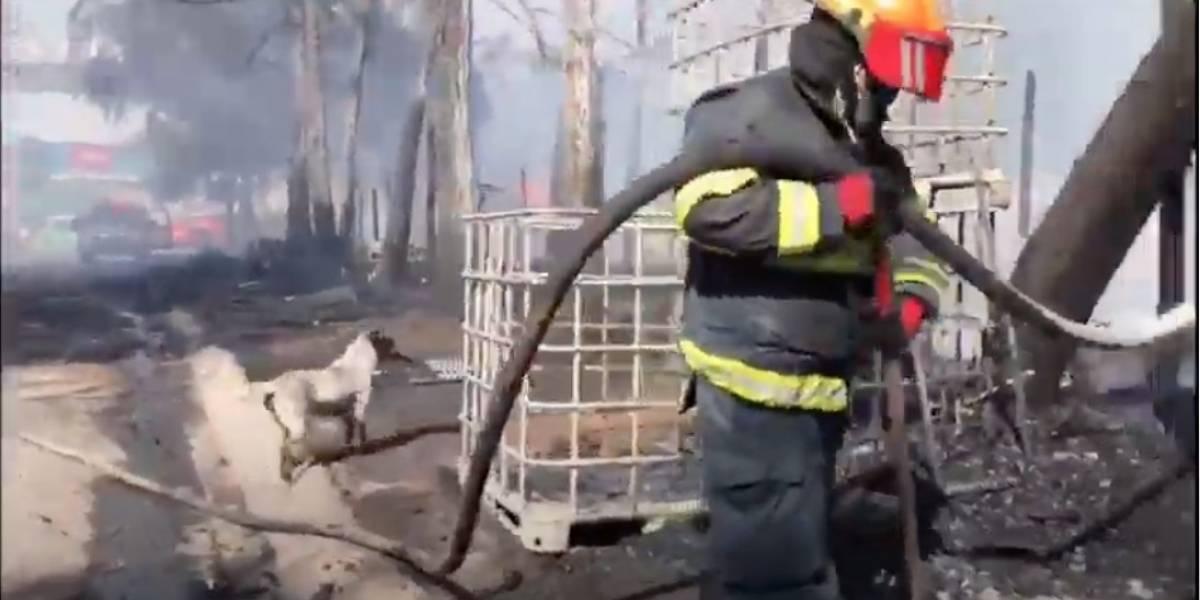 El llanto desconsolado de un perro luego de que un incendio destruyera su hogar