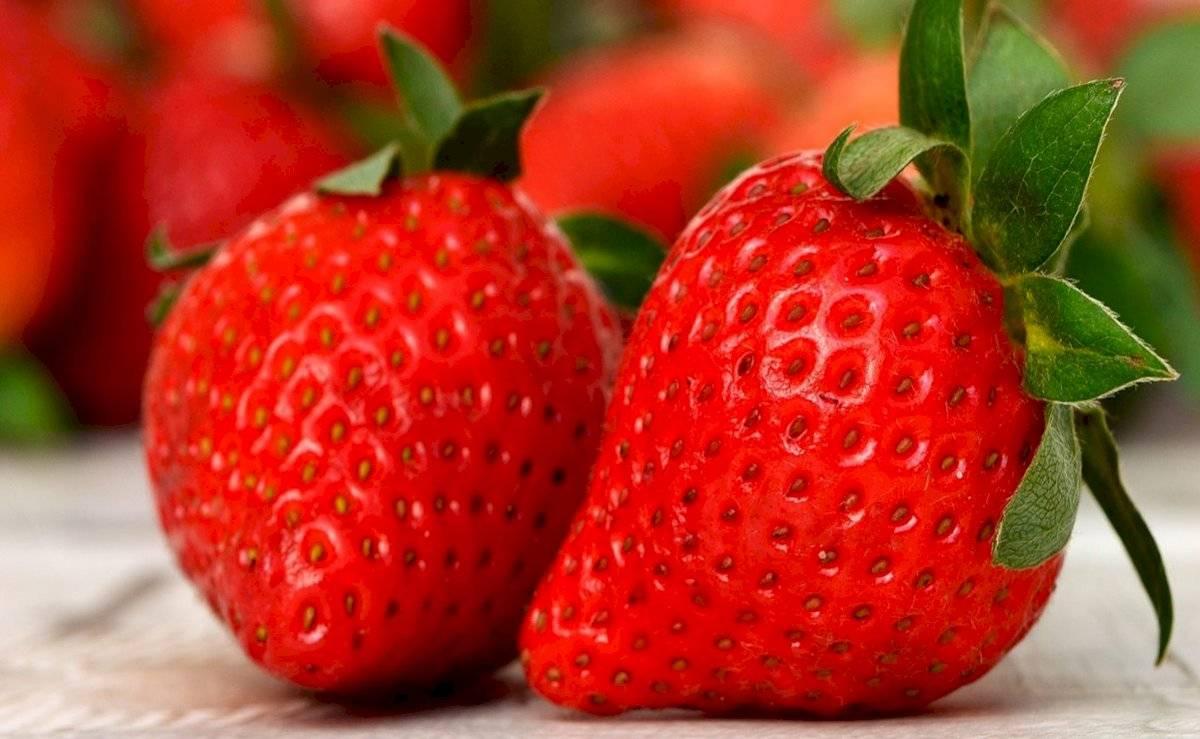 Las fresas son excelentes antioxidantes