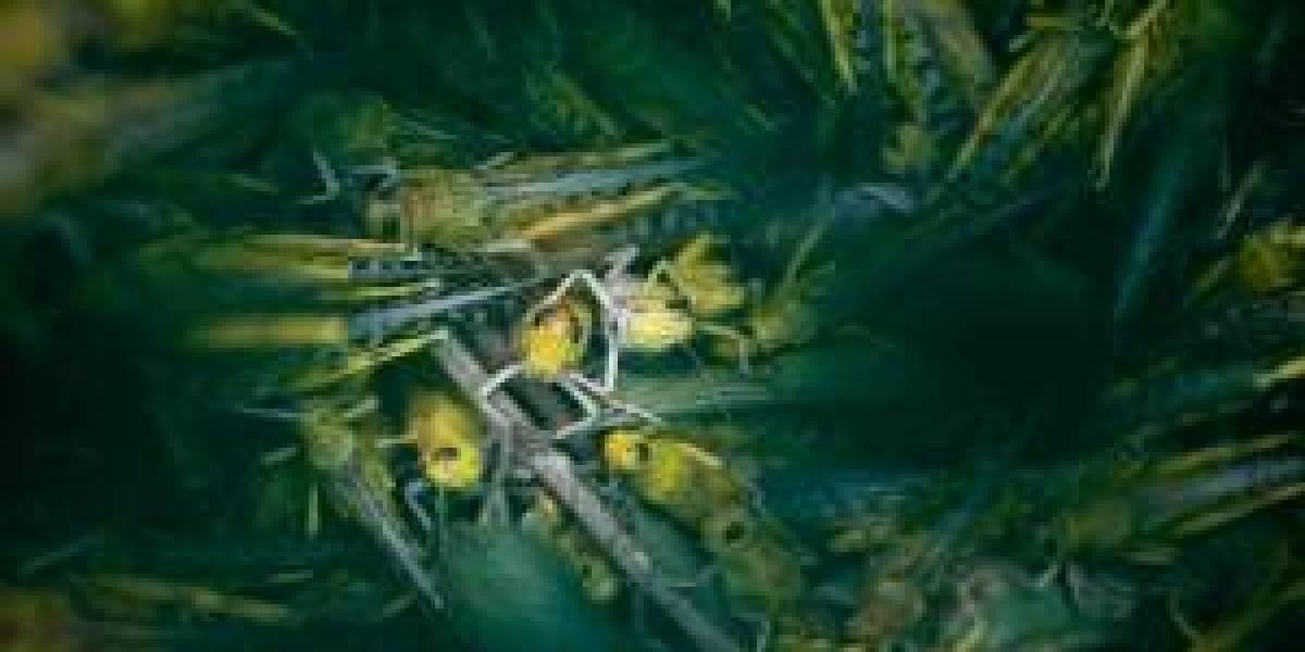 La plaga bíblica que podría provocar más muertes que el coronavirus