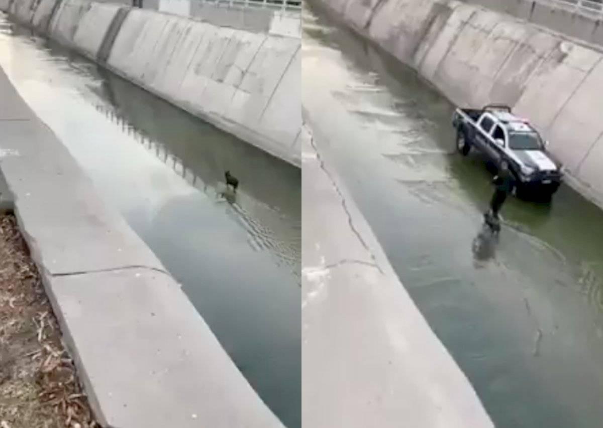 Policía rescata a perro