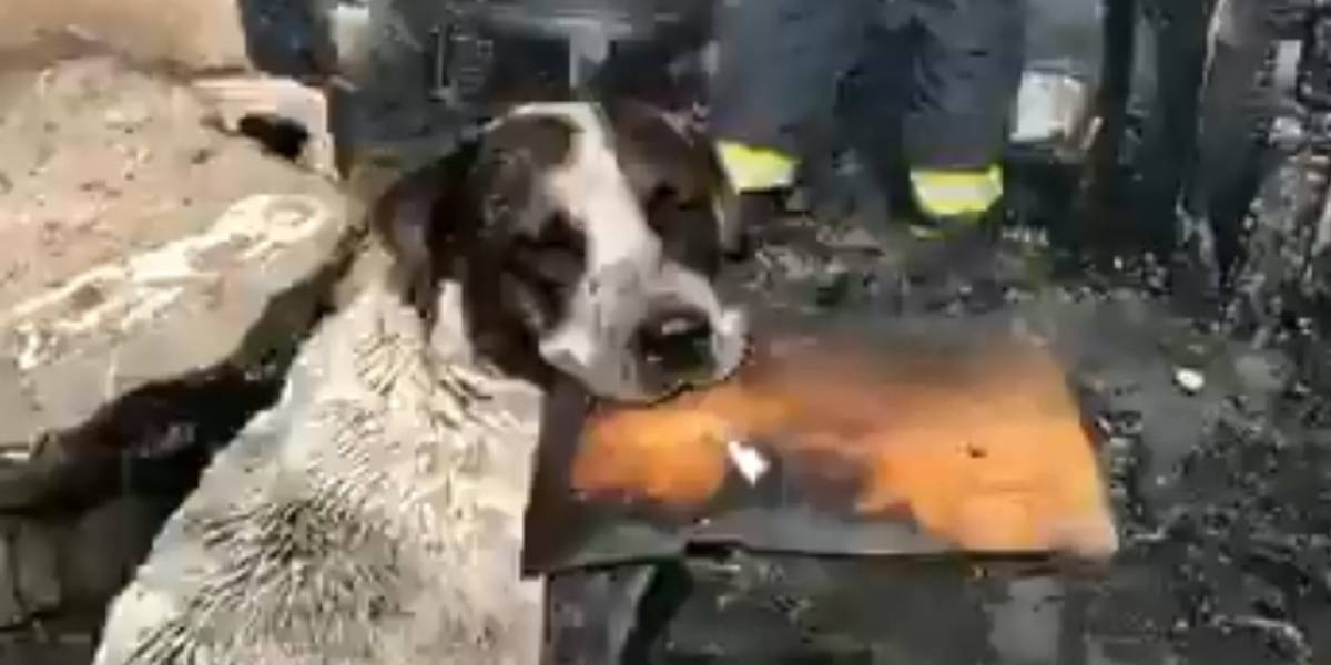 Perro conmueve al llorar presenciando cómo un incendio consume su refugio