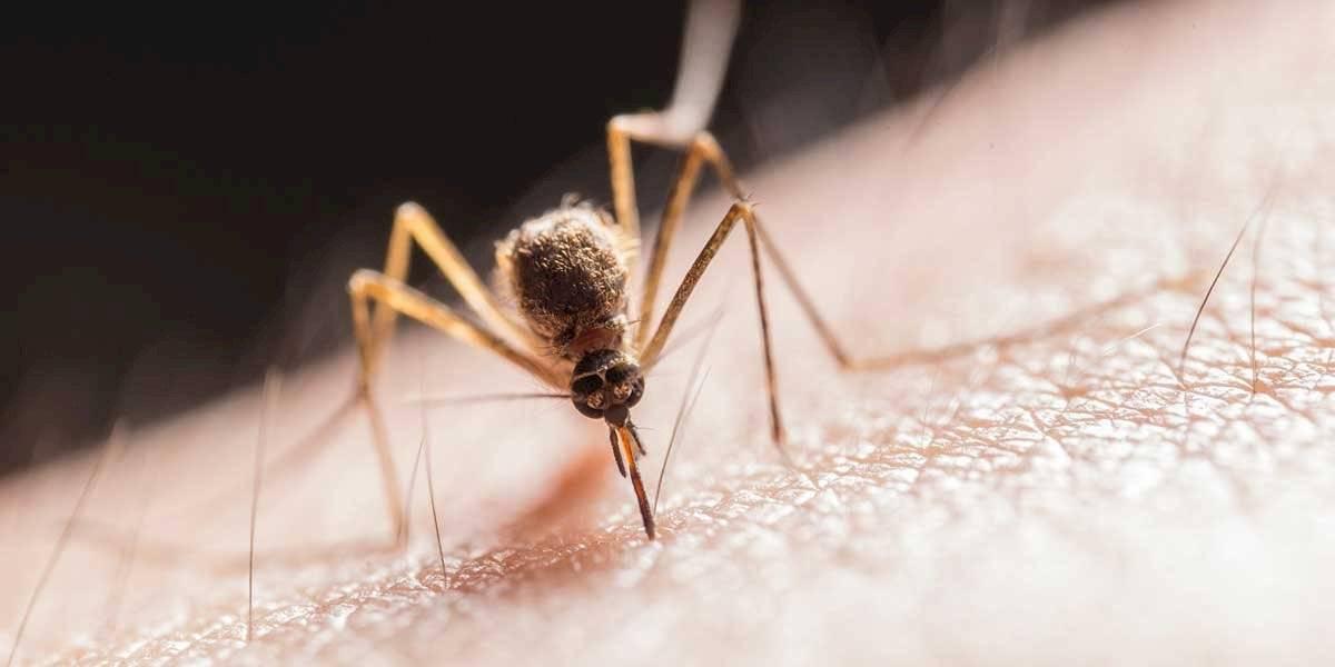 Aprende a usar el bicarbonato para tratar la picadura de mosquito