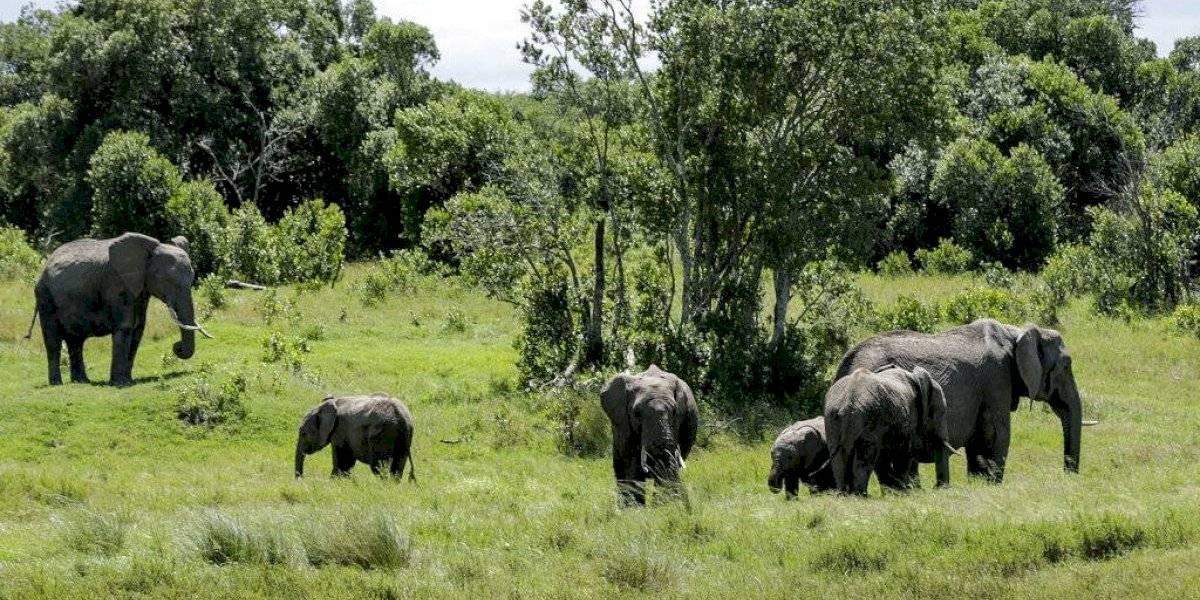 Safaris virtuales acercan los animales a turistas confinados
