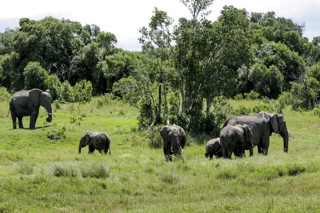 últimos rinocerontes blancos safari de sofá