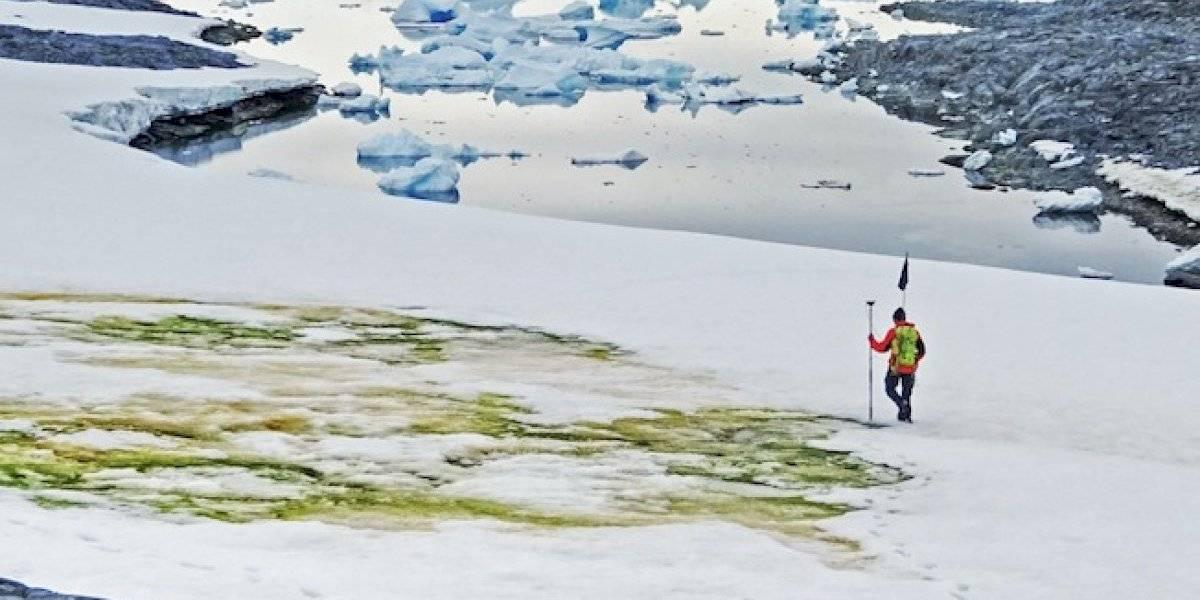 ¿Pasto en la Antártida? El cambio climático está tiñendo de verde al continente blanco