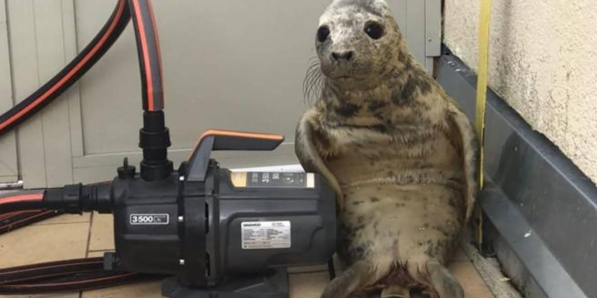 Imagem que mostra reação de bebê foca ao ser pego tentando fugir vira meme