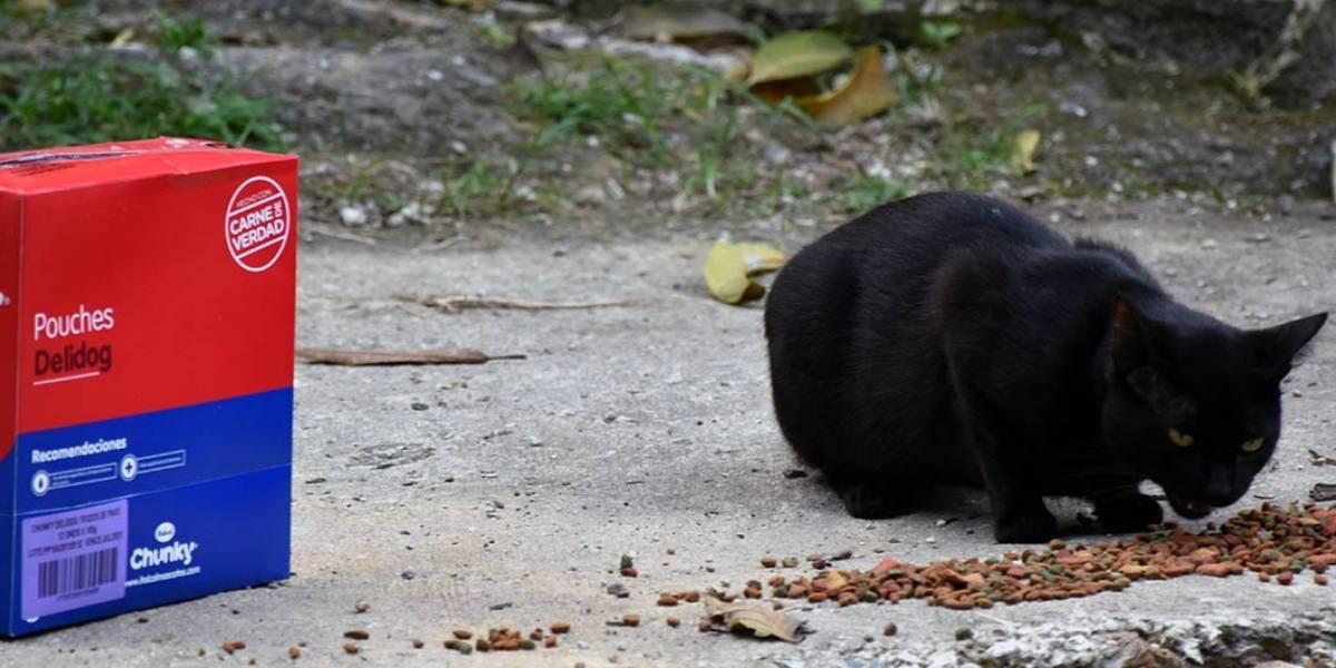 Cali tiene un 'escuadrón' que ayuda a las mascotas de familias vulnerables