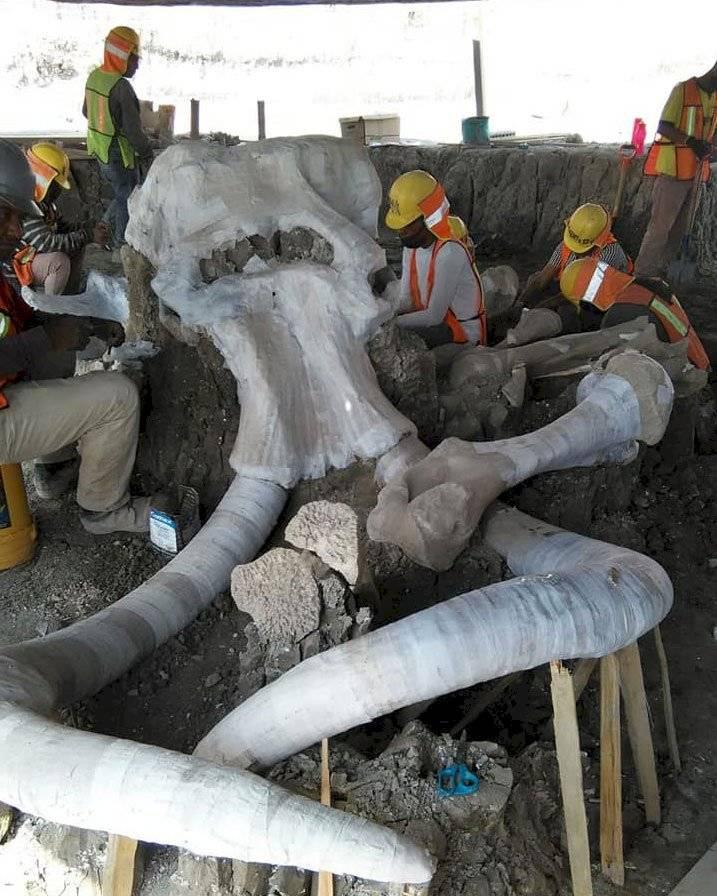 Restos de mamuts en México