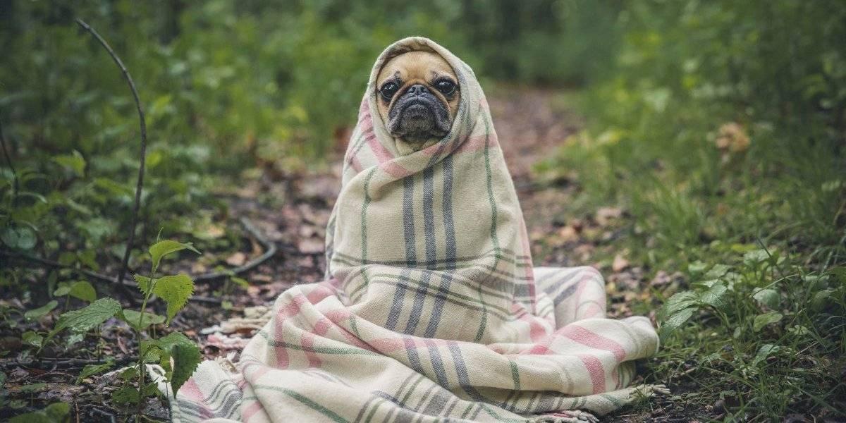 Pets precisam de cuidados especiais durante inverno; veja quais