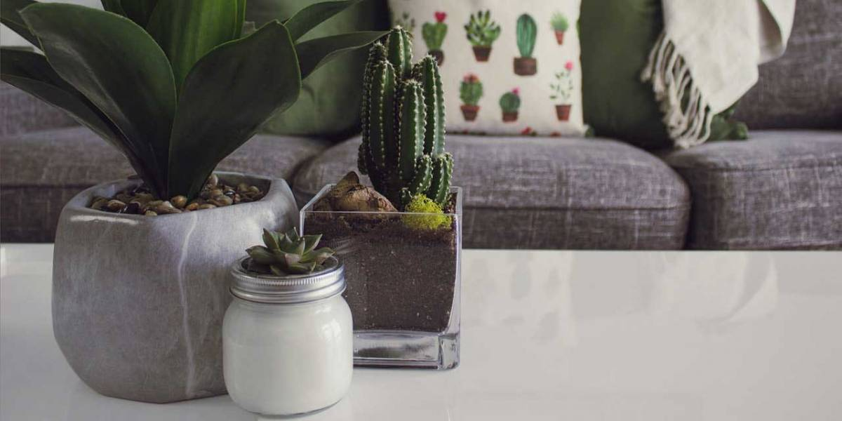Mira nueve maneras sencillas de decorar un espacio pequeño con plantas