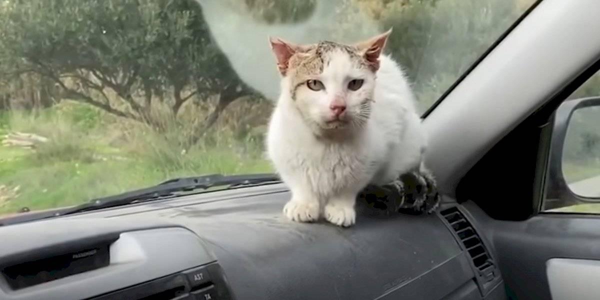 Rescató un gato abandonado, lo subió a su auto y esto fue lo que sucedió