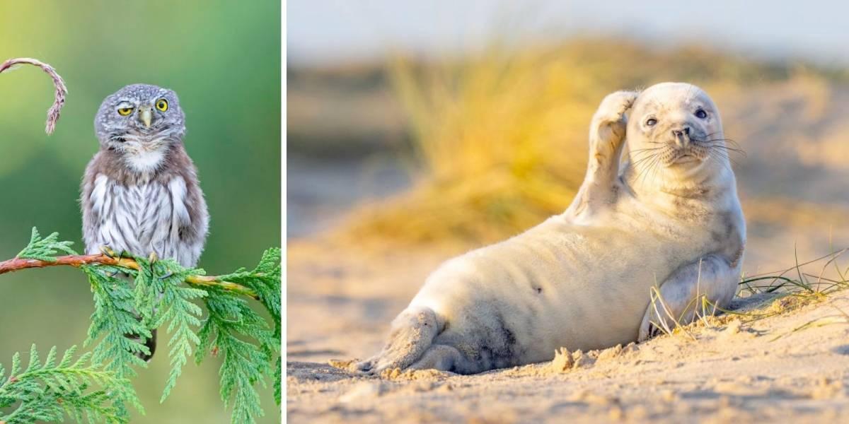 Estas 12 fotos de comédia de animais viralizaram na internet; confira a galeria