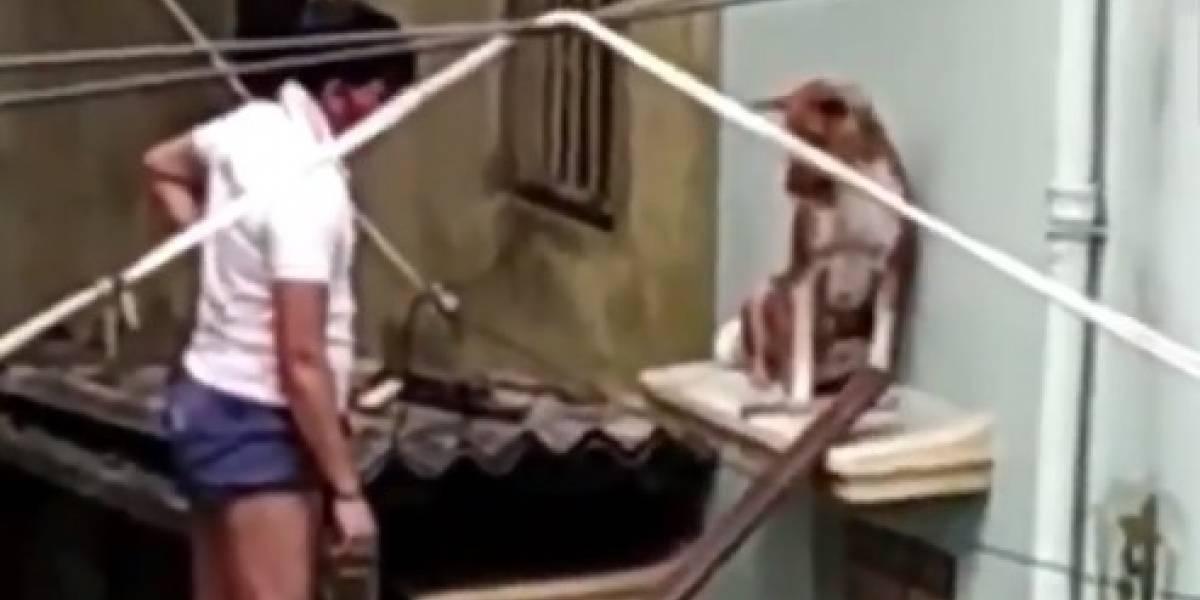 Vídeo de jovens resgatando cachorro após ciclone se torna viral nas redes sociais