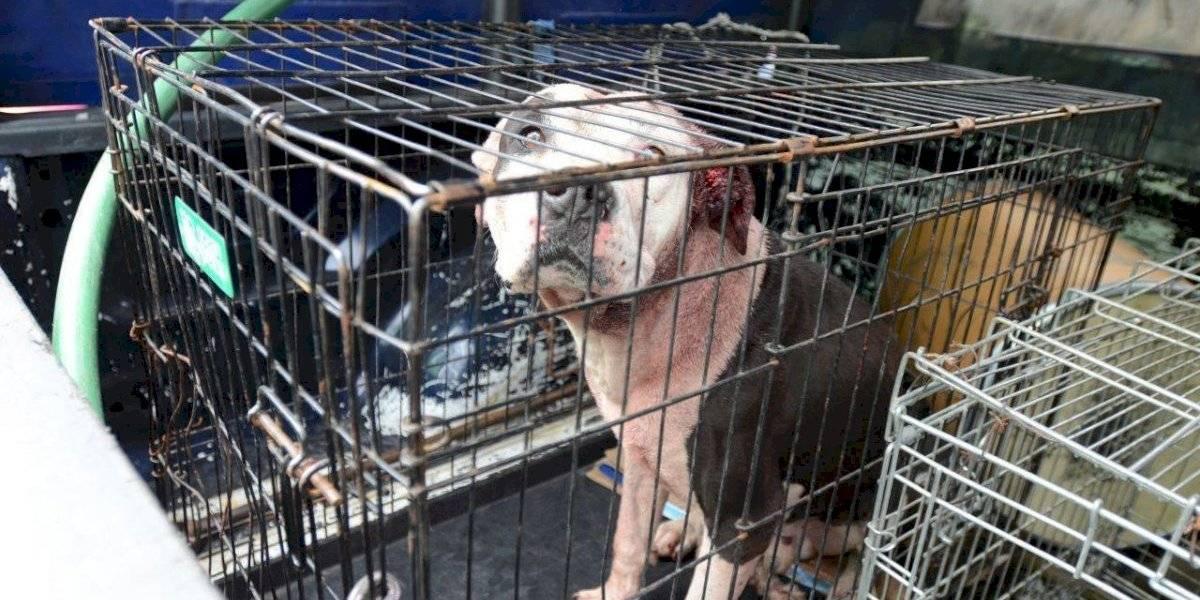 Perro pitbull mata a mujer de la tercera edad en la CDMX