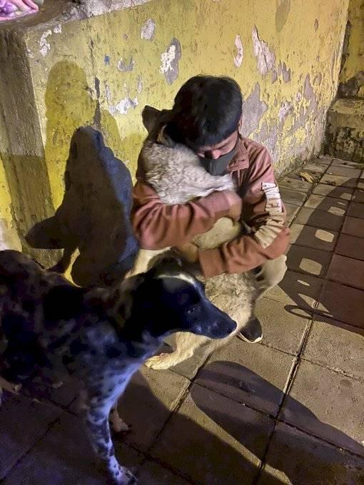 Dos animales rescatados en colapso estructural en Quito