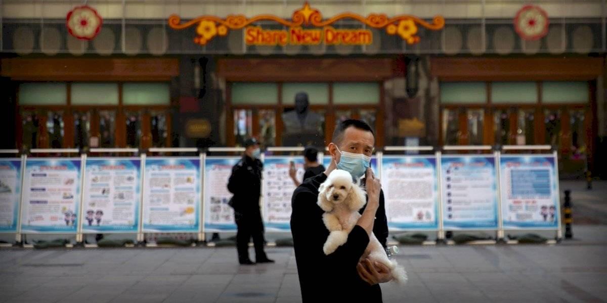 China golpea la mesa: se prohibe comer perros y criarlos para alimento