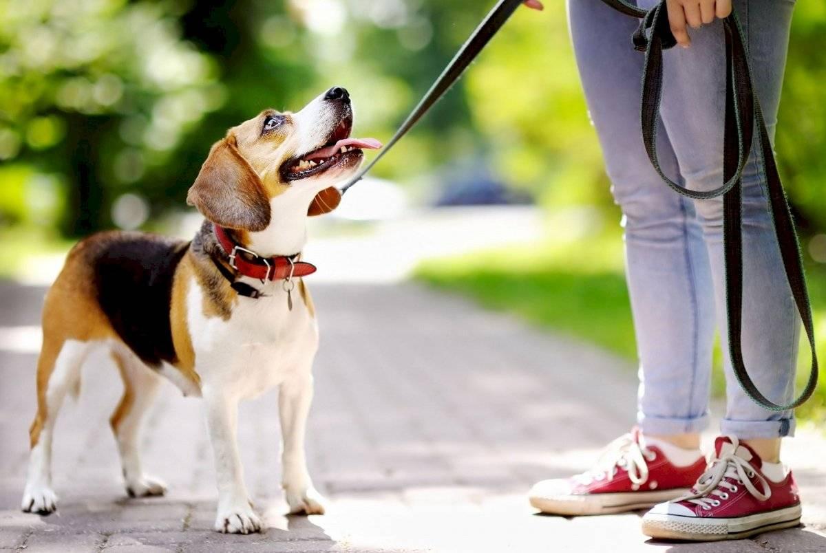 Trata de pasear a tu perro en horas donde no le pegue el sol