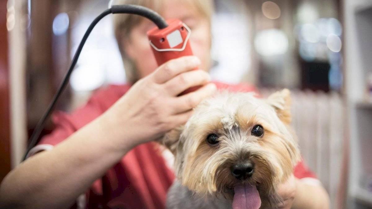El pelo protege al perro contra el calor, así que no lo rapes