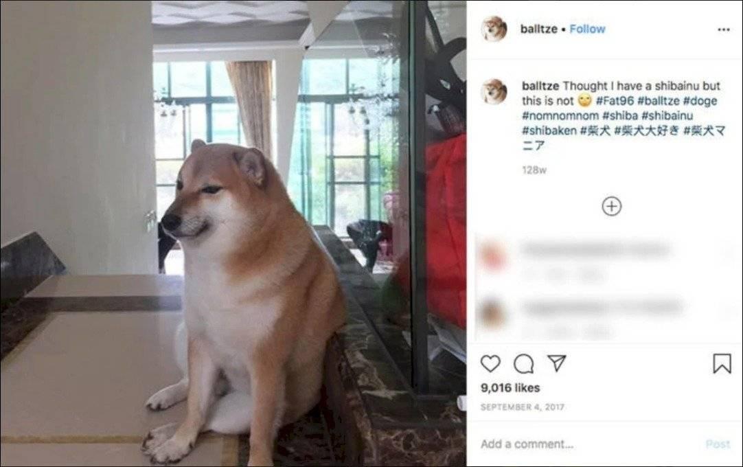 ¡El origen del meme del perro de antes y de ahora es revelado!