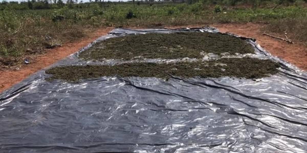 Paraguay.- Paraguay destruye 23,4 toneladas de marihuana y una veintena de campamentos del narcotráfico