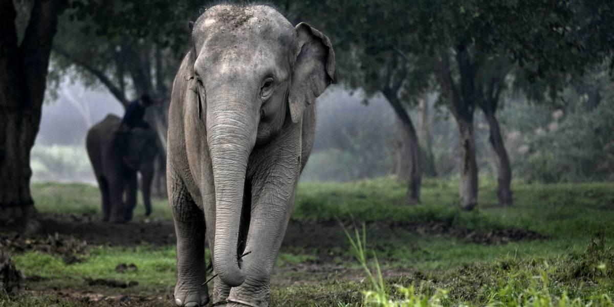 Encuentran a más de 100 elefantes muertos sin razón: el hecho ocurrió en un parque de Botswana