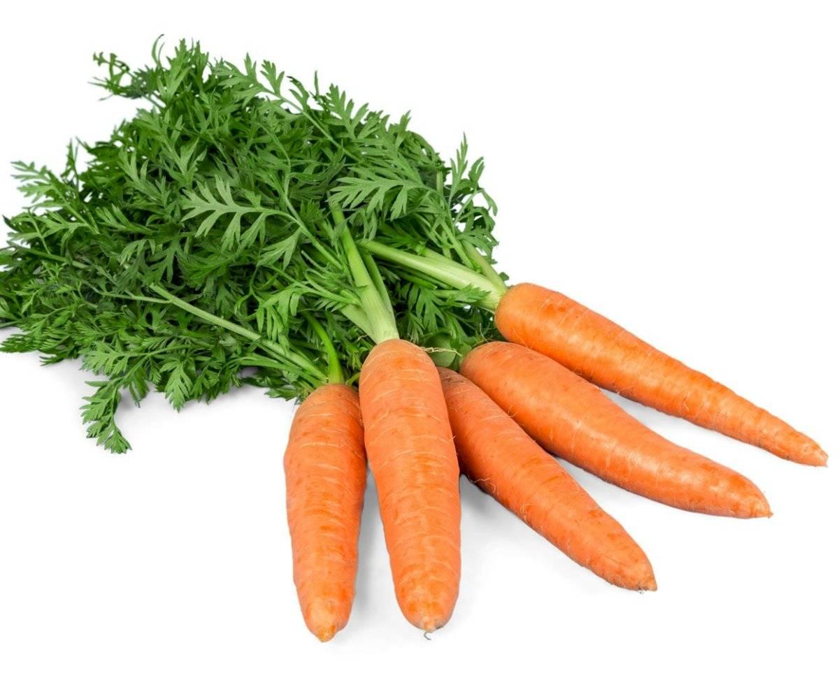 La zanahoria también reforzará tu sistema inmunológico