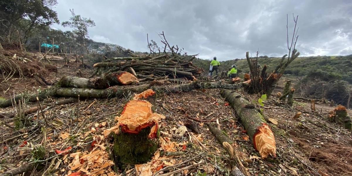 Las manos criminales detrás del desastre ecológico en Entrenubes, el pulmón de tres localidades de Bogotá