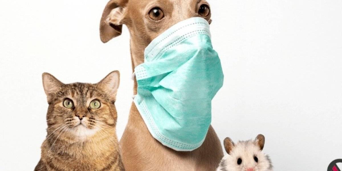 Es más probable que tú contagies a tus mascotas de COVID-19, que ellas a ti