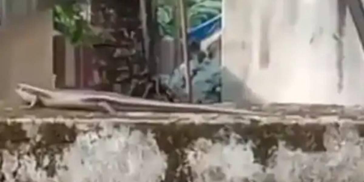 Mulher que filmava salamandra é surpreendida por grande cobra e vídeo é compartilhado no Facebook