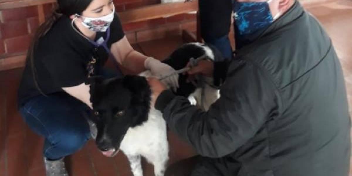 Maltrato animal en Soacha: tres jóvenes apuñalaron a un perro callejero