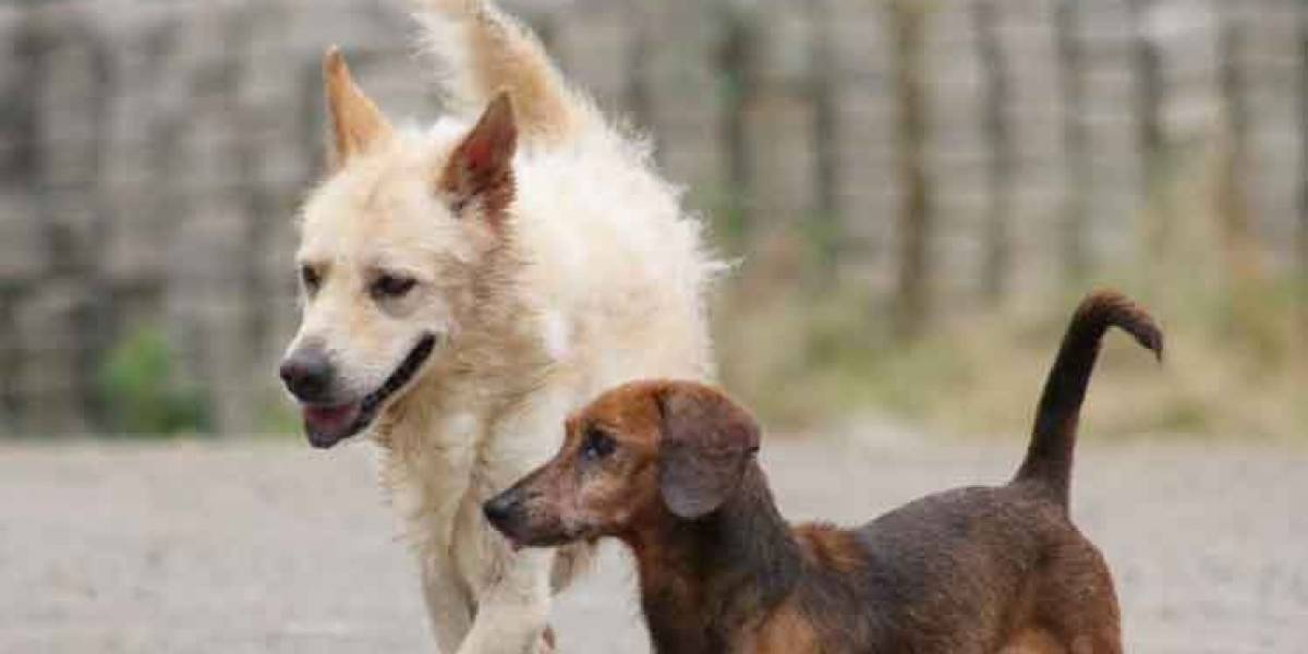 Guayaquil comenzó esterilización gratuita mascotas