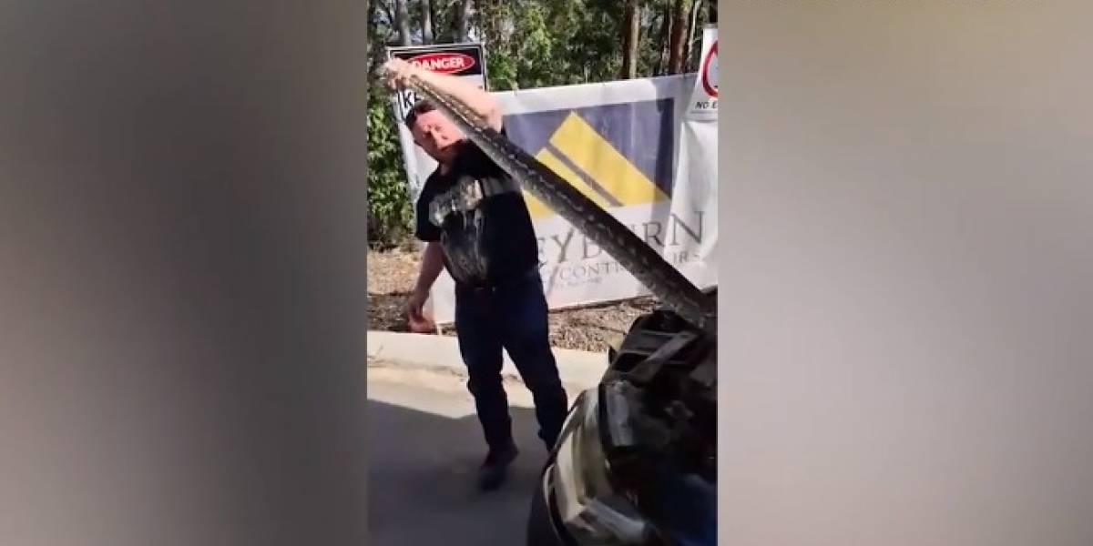 Homem captura grande píton escondida em carro e vídeo impressiona as redes sociais