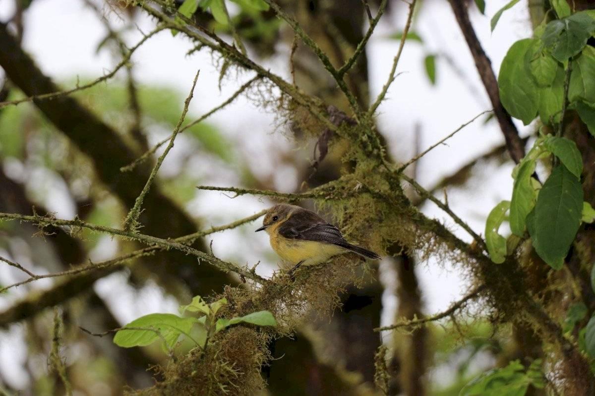 Imagen sobre el nacimiento de los pájaros