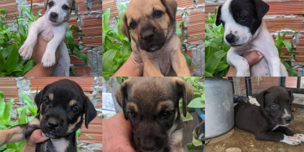 ¡En la basura! abandonaron a seis adorables cachorros en una caja