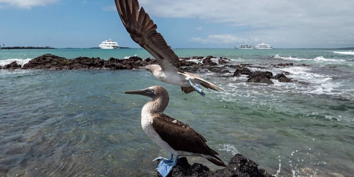 Galápagos reabre sitios de visita tras cuatro meses