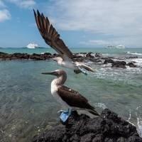 Se emite nuevo protocolo para ingreso de turistas a Galápagos