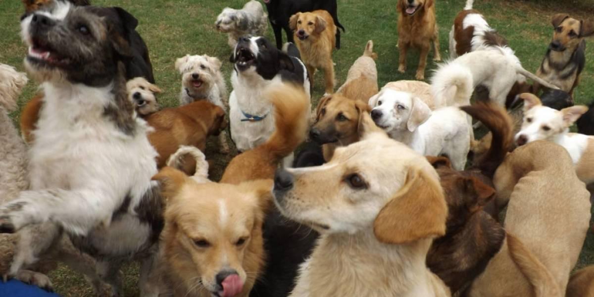 Campaña virtual de adopción de mascotas en Quito