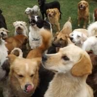 Fundación Lucky Bienestar Animal cierra sus puertas