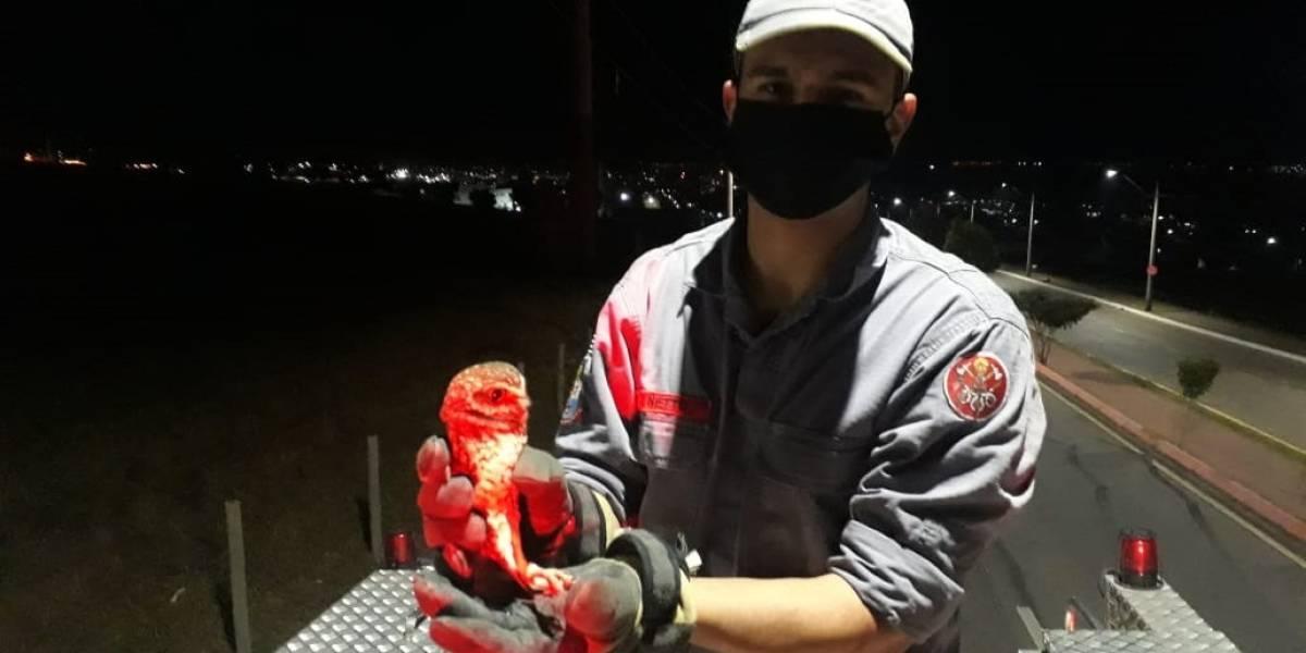 Coruja presa em pipa é salva por bombeiros em São José dos Campos