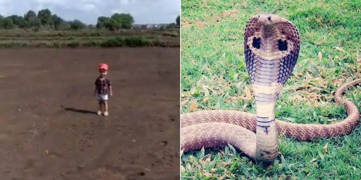 Vídeo mostra criança tentando pegar cobra-rei e desespero do pai alerta as redes sociais