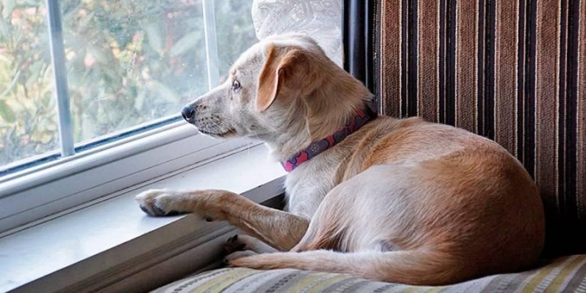 Consejos para cuidarlas: las mascotas también sufren con las cuarentenas