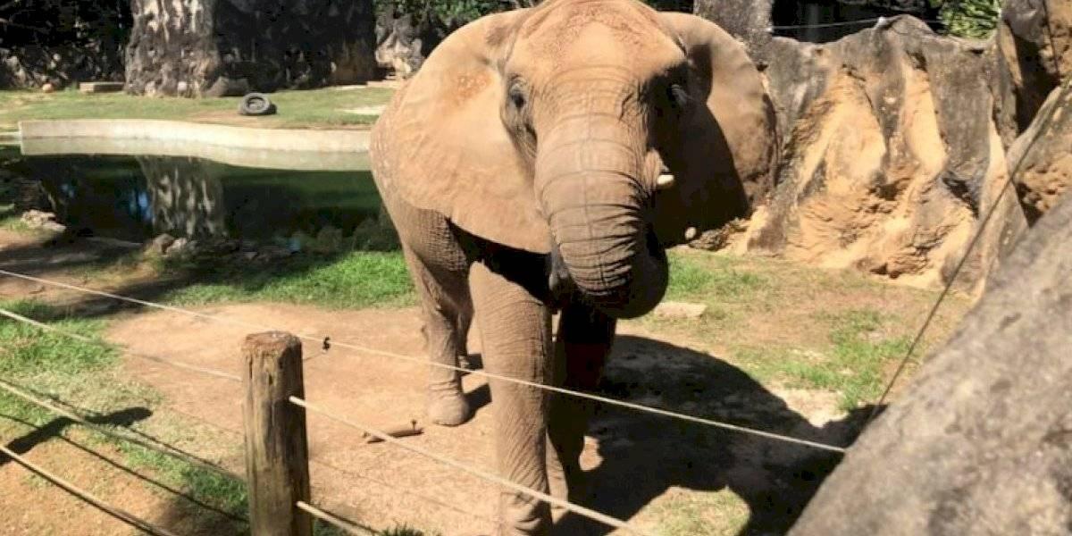 Rechazan muertes de animales en el Zoológico de Mayagüez