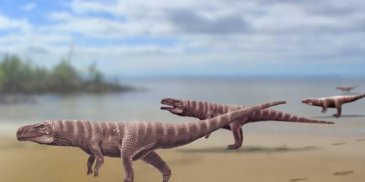 Paleontólogos descubrieron una especie de cocodrilo que llegó a caminar sobre dos patas hace 120 millones de años