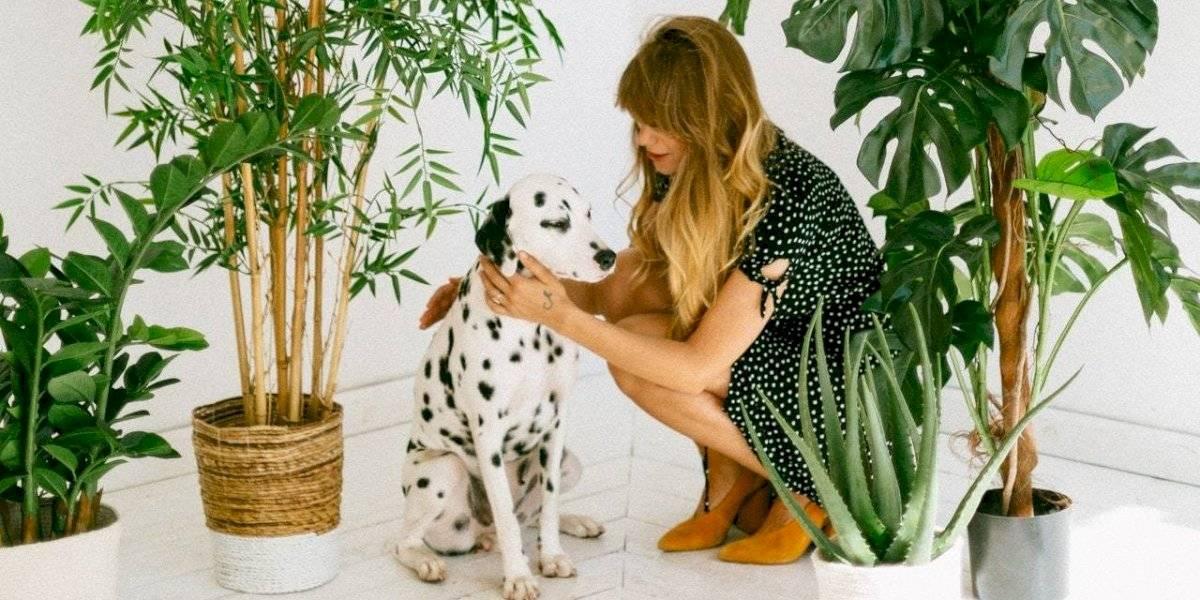 15 plantas perigosas para os cães; evite tê-las em sua casa