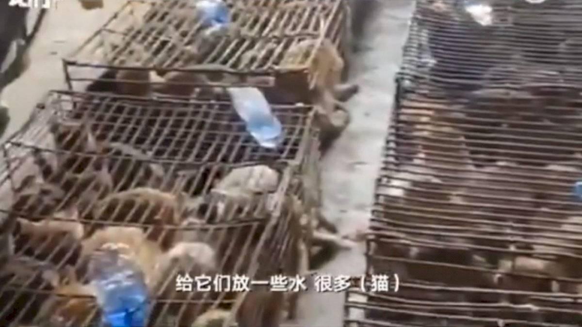 Gatos hacinados