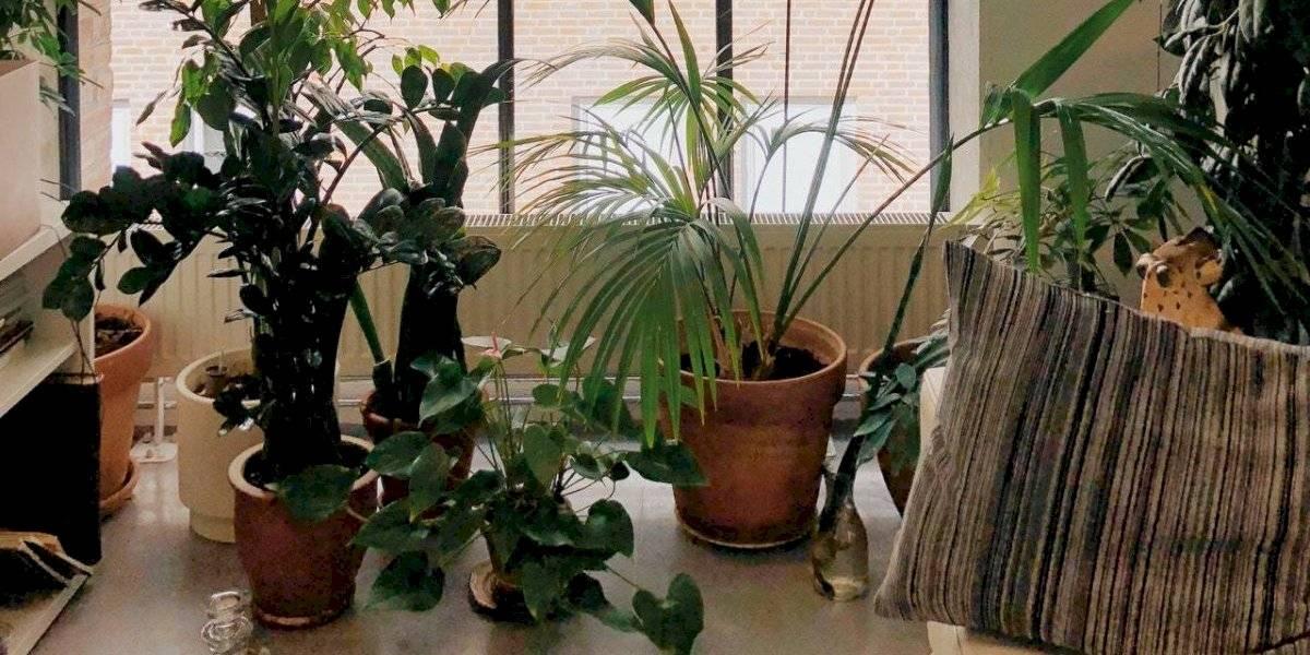 6 plantas que renovarão a energia da sua casa