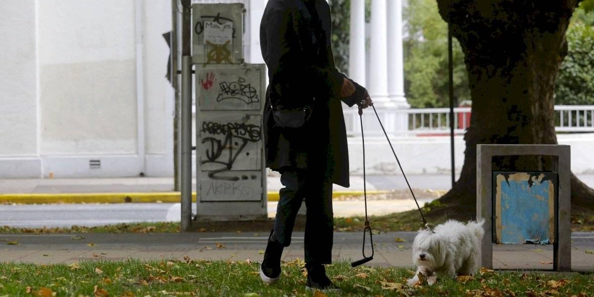 Piden aumentar a tres los permisos diarios para pasear a mascotas en cuarentena