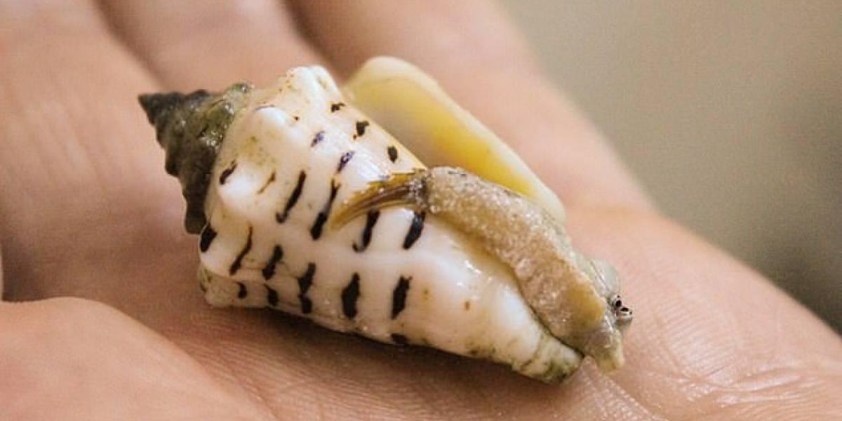 Estudio revela que en largos periodos de sequía, el Homo Sapiens acudía al mar en busca de Shellfish