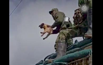 Soldado lanzó al aire a un cachorro, dejándolo caer a varios metros de distancia